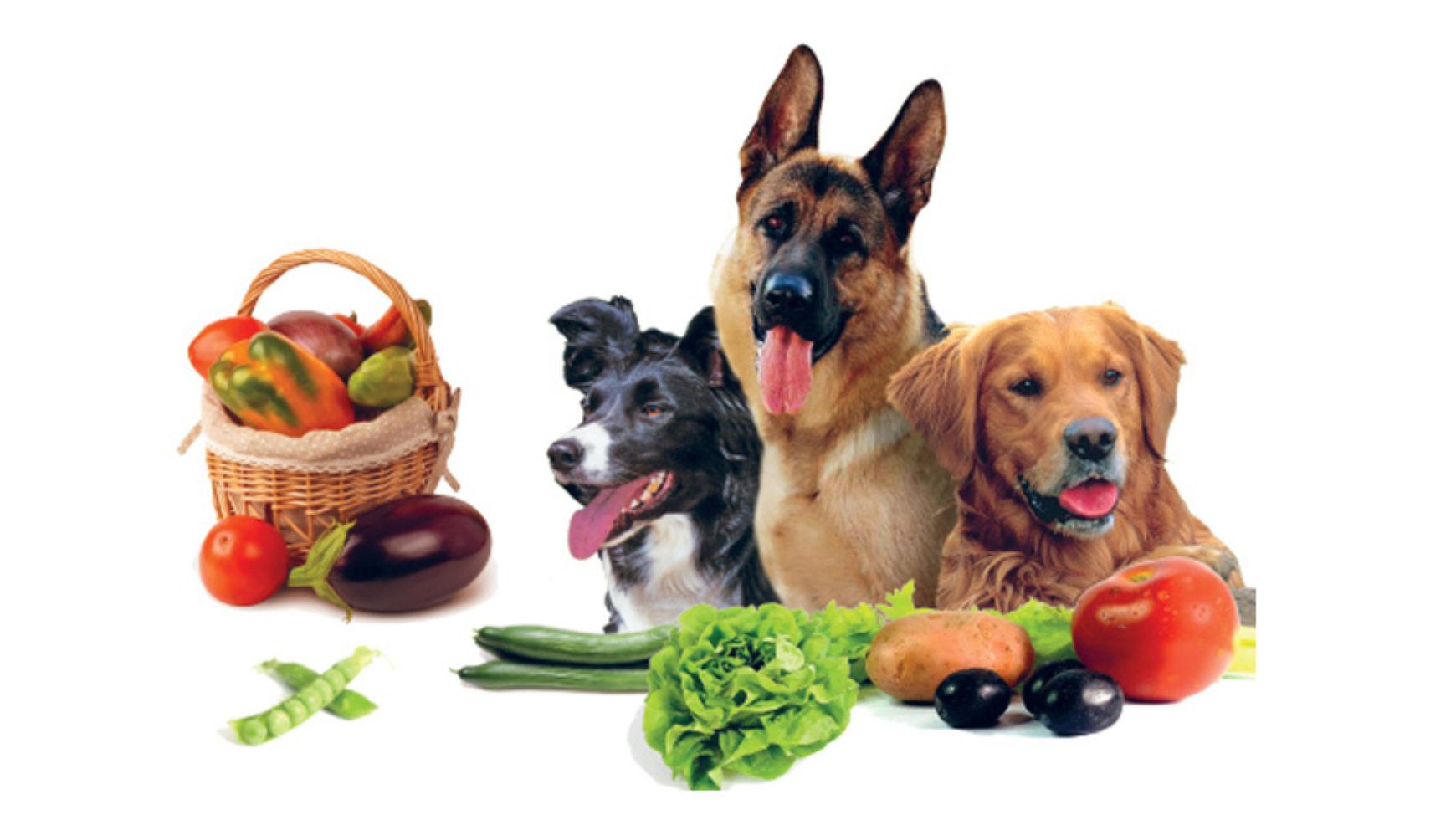 Risultati immagini per CANE Con verdure