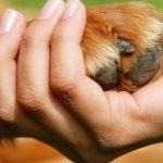 Pet Therapy a Quinto di Treviso