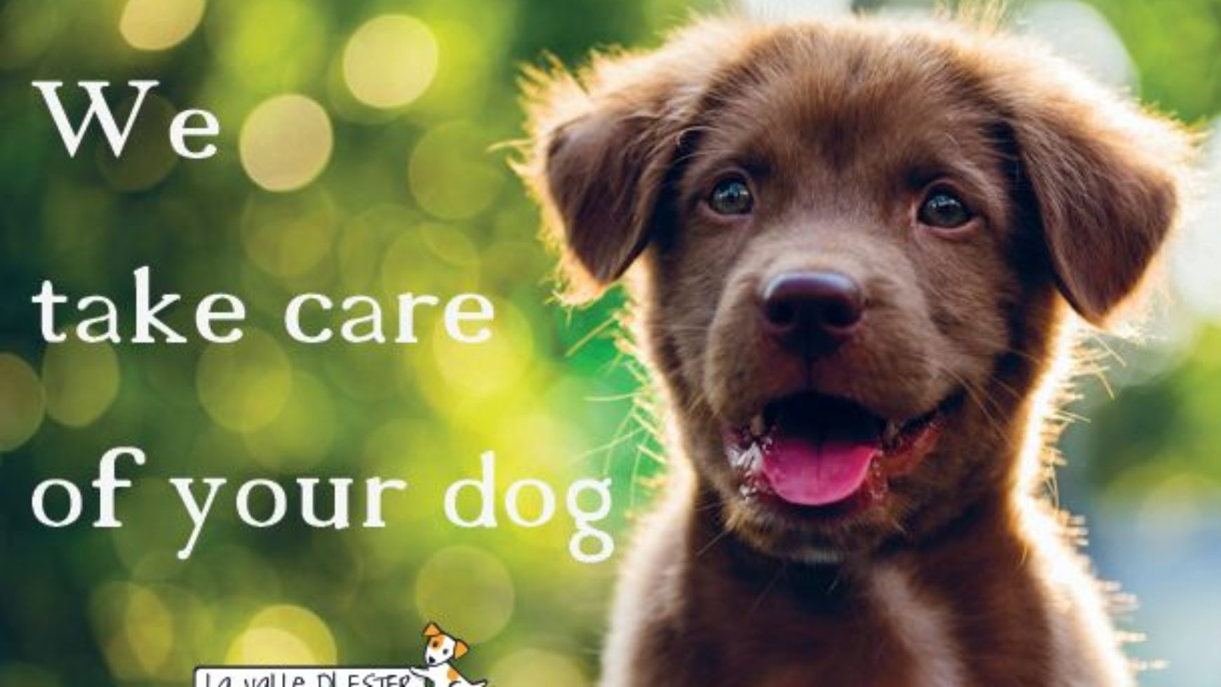WE TAKE CARE OF YOUR DOG!