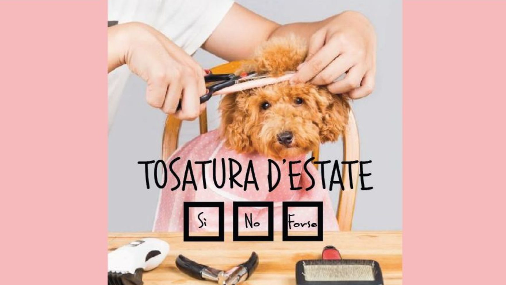 TOSARE IL CANE D'ESTATE: SI' O NO?