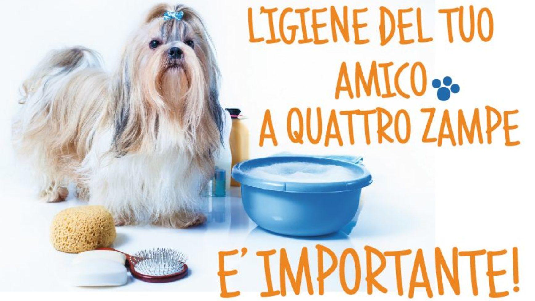 L'IMPORTANZA DELL'IGIENE DEL TUO ANIMALE DA COMPAGNIA