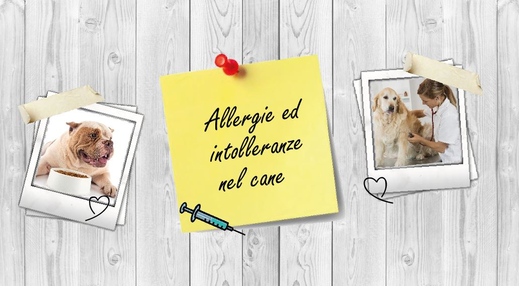 Allergie ed intolleranze alimentari nei cani