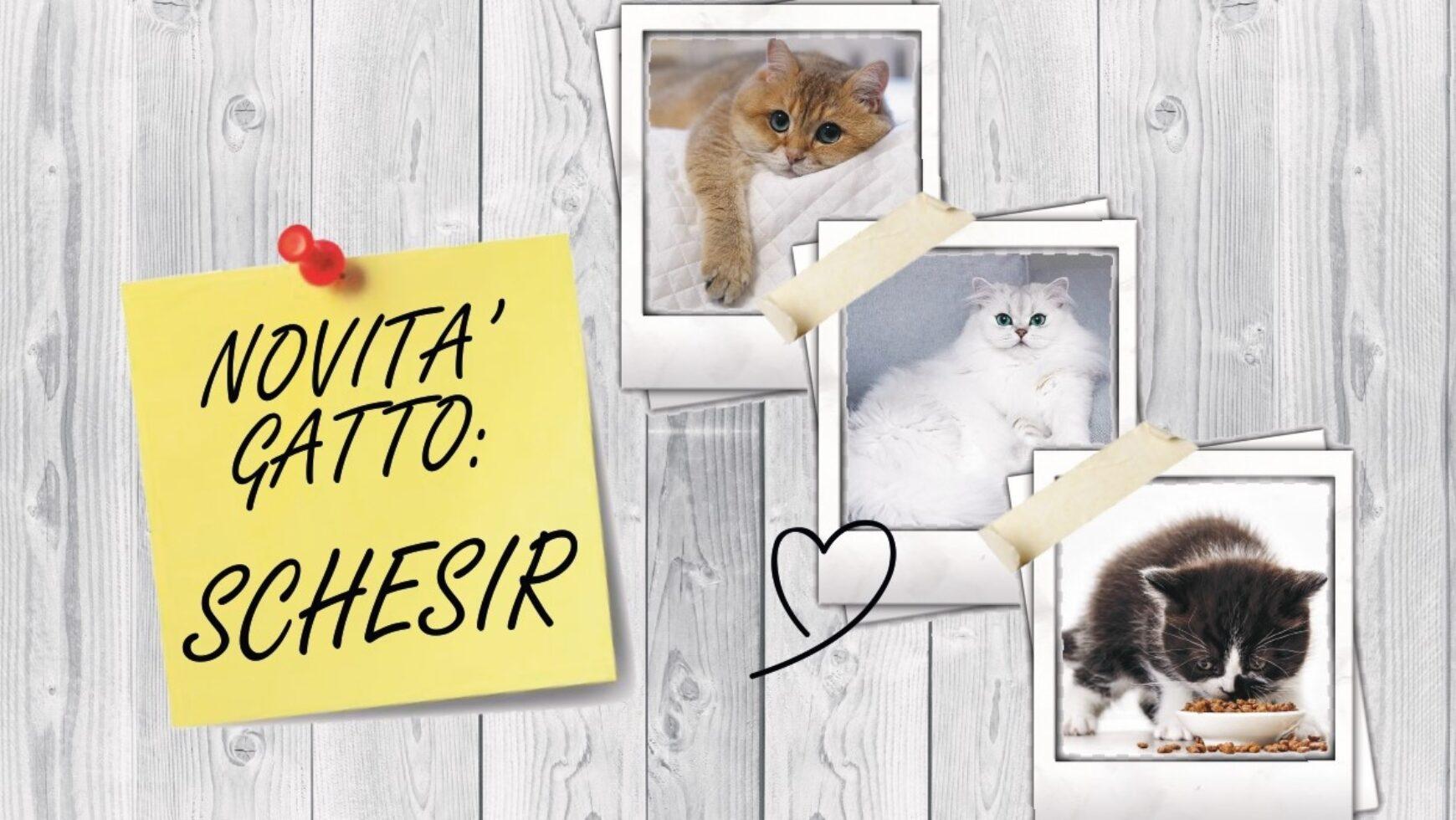GRANDE NOVITA': LINEA GATTO SCHESIR!