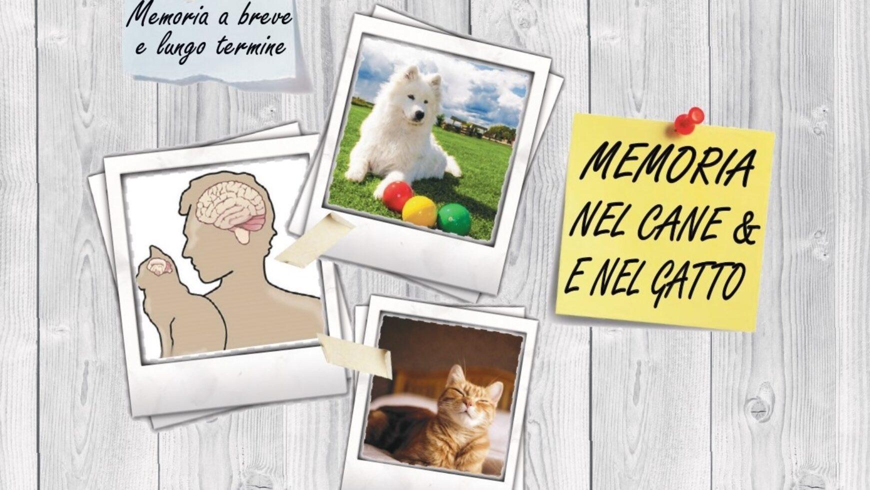Memoria nei cani e nei gatti