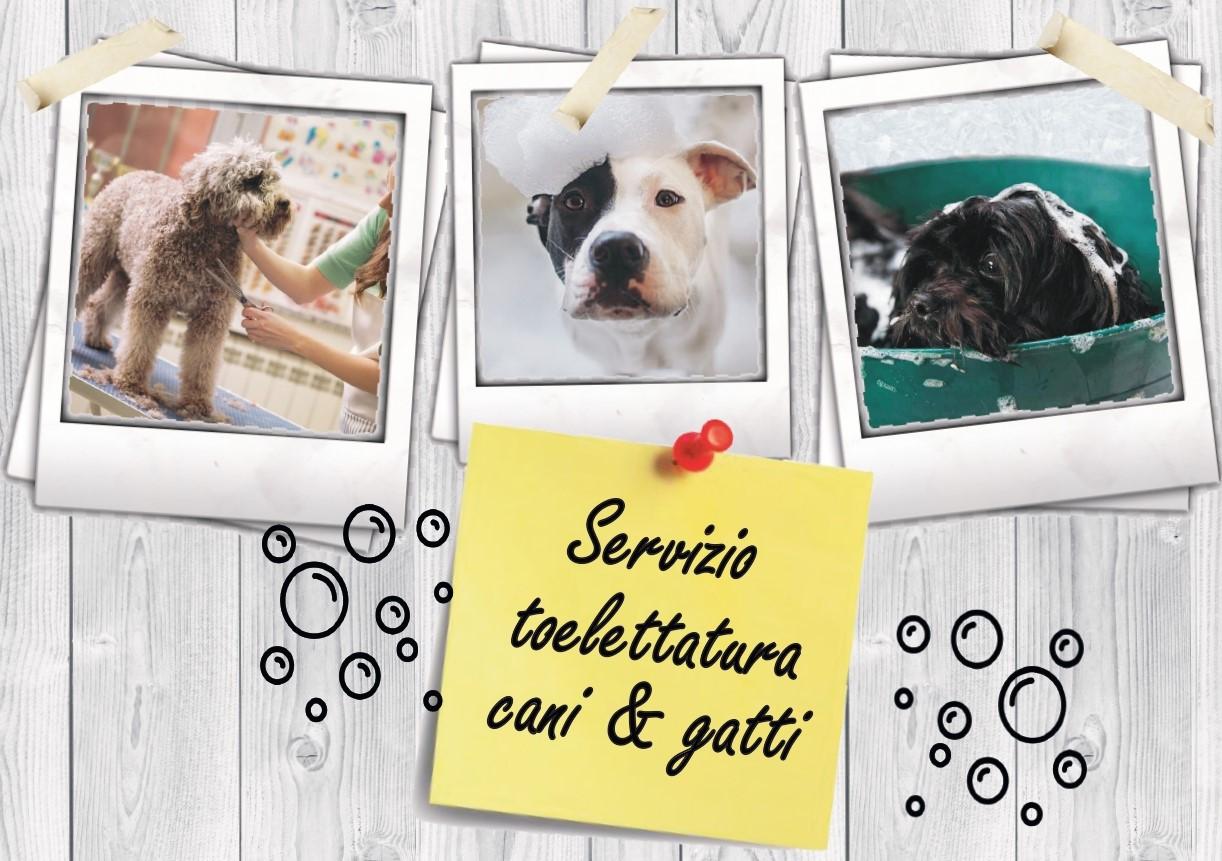 Servizio di toelettatura per cani e… gatti!